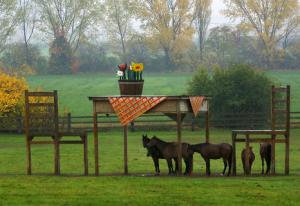 Ett regnskydd med formen av ett picknickbord