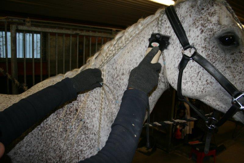 Gå över alla områdena på hästen med klipparen INNAN du sätter på den om det är första gången du klipper hästen.