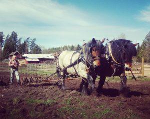 Dolly och Custer